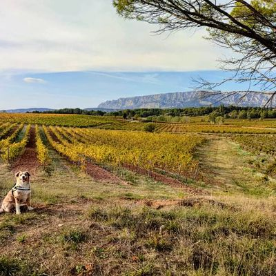 L' automne dans les vignes