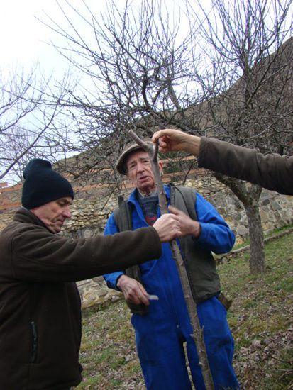Les greffes et tailles des arbres sont des procedes qui existent depuis tout temps et font partie du savoir faire et du patrimoine culturel de notre village Cordialement Le Castor