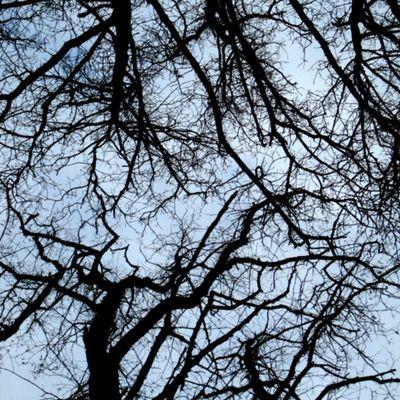 Branches en hiver...