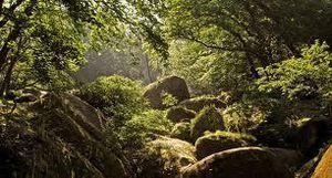 Le monde était forêt