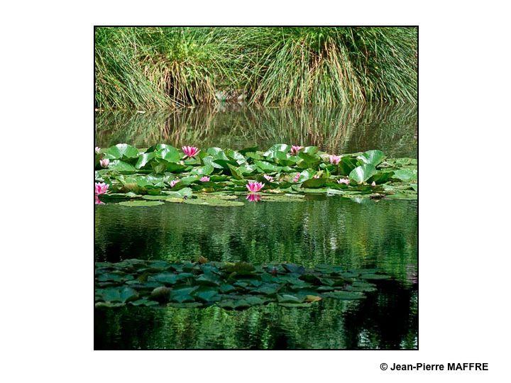 Giverny et ses nymphéas A Giverny, on a l'impression d'entrer dans un tableau de Claude Monet dont on peut explorer et photographier les moindres détails.