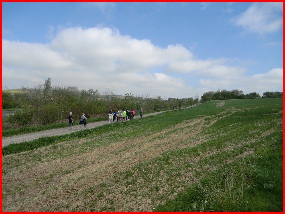 MARCHEURS PERONNAIS RANDONNÉE NURLU 80 05/05/2013  12 et 6 KM