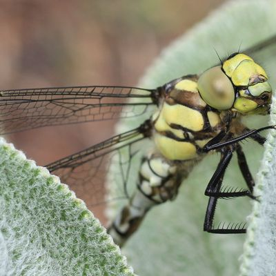 Insectes (3)