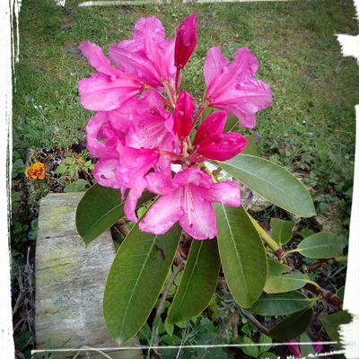 Un peu de couleur dans le jardin....et dans la maison....