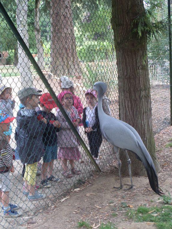 Sortie au Zoo de la Bourbansais - classe de TPS PS MS - juin 2017