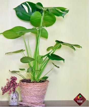 carrement fleurs plantes vertes
