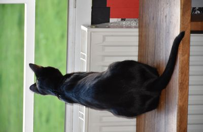 Maxwell  à la fenêtre