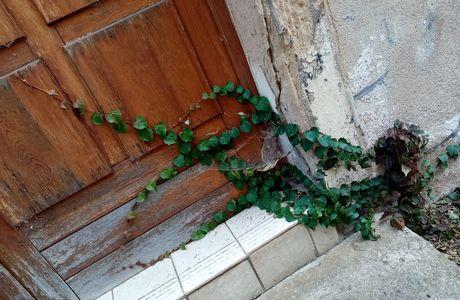 """Quand la nature reprend ses droits..."" : SERIE, PHOTO N°3"