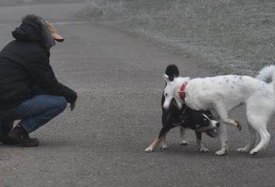 Première balade canine post greffe avec Ourale