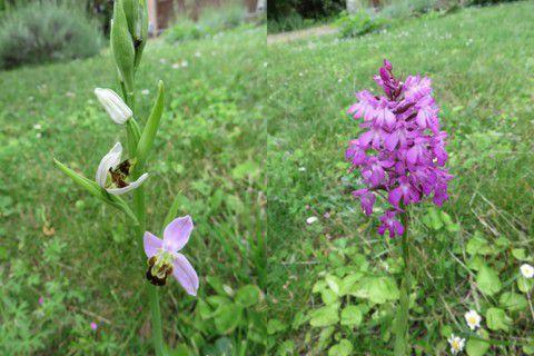 Les orchidées du jardin