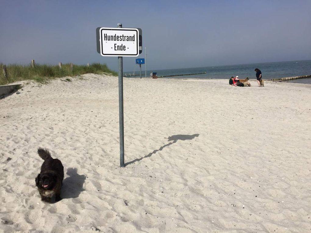 L'été de la boitamoutards - Épisode II : La mer Baltique/Lubëck (partie 4)