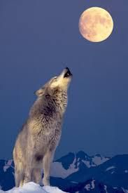 Le Credo du Loup