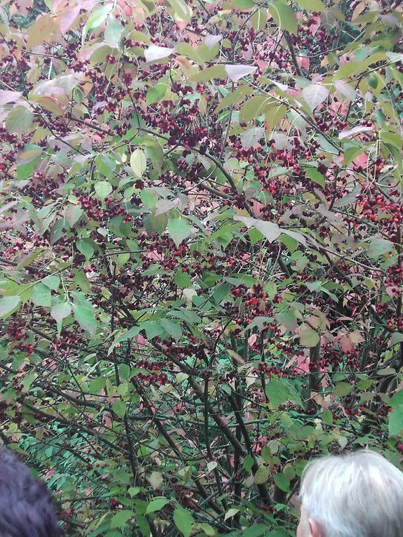 à Rémalard en Normandie dans l'orne , proche de chez nous, nous visitons souvent ce magnifique jardin... dans notre bibliothèque le livre d'Hélène d'Andlau :Métamorphoses d'un jardin ,naissance d'un poème . www.la-petite-rochelle.com