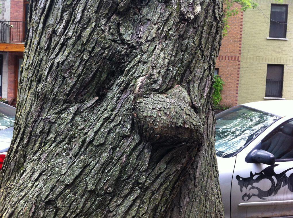 Ces différents arbres n'ont pas à rougir face à ceux du réalisateur Tim Burton !