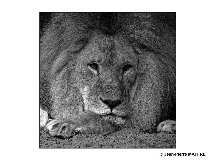 La nature en couleurs, oui. Mais souvent le noir et le blanc permettent de sentir l'ultime beauté du règne animal.