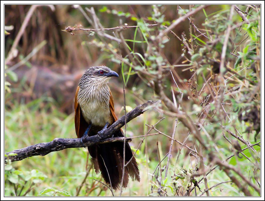 Safari dans le parc d'Arusha en Juillet 2010.