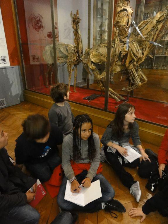 Album - Musee-ecole-veterinaire---Fragonard- 2011-2012