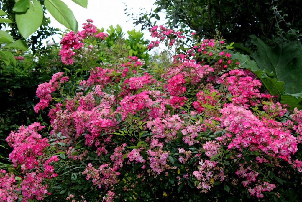Floraisons de juillet,