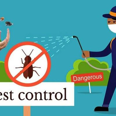 The secrets behind the success of professional pest control in Vancouver