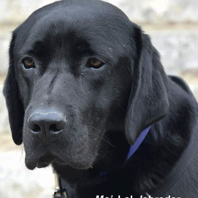 Almendros Frédéric: Le chien thérapeute