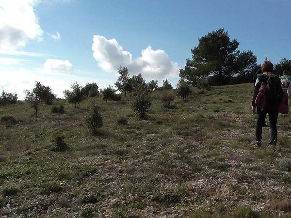Nous dénichons un beau versant face au soleil, au milieu de jeunes chênes truffiers. Tip top pour casser la croute