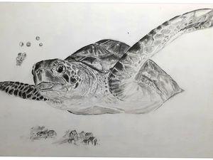 Franck Gélinet - La migration de la tortue -