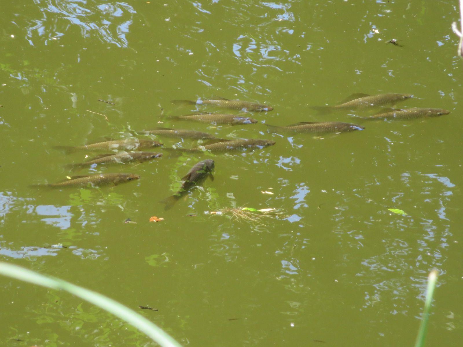 Allons faire une petite visite à l'étang pour se rafraichir ,et pour dire bonjour à ses habitants