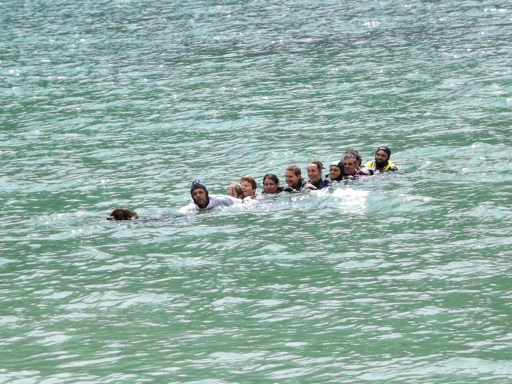 26-27-28- juillet rencontre internationale des passionnés et amis du terre-neuve sur le lac de Molvéno au Nord du lacx de Garde 271 terre-neuve étaient inscrits pour les démonstrations de travail  au sol et à l'eau
