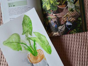 Des pots, des plantes et un beau jardin