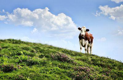 Les comices agricoles font le bonheur des petits comme des grands!