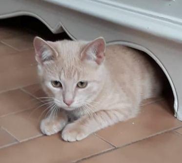 SINGLE chaton mâle 3 mois et demi né le 1er juin 2021- En accueil