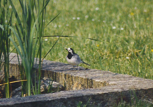 Album - oiseaux-passereaux