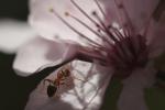 lire avec les animots rigolos (la fourmi 2)