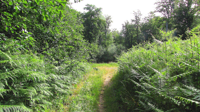carrefour_Chemin du Fau Bidaud_Chemin de la Voie d'Eau