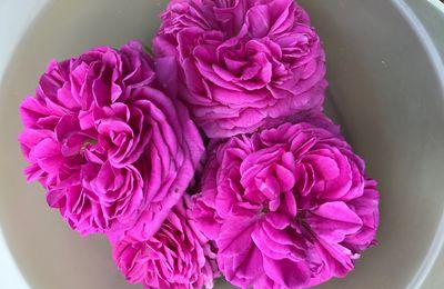 Eau de roses par infusion