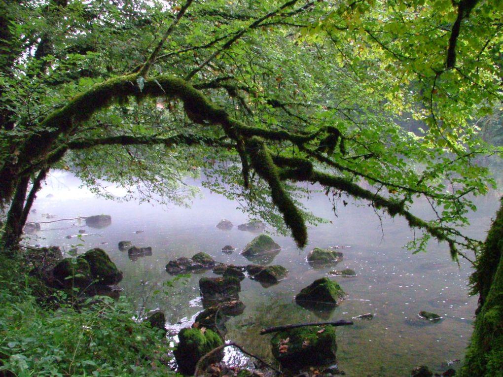 Album - La Forêt avoisinante