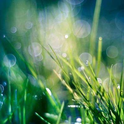 Là où tombe la pluie – Catherine Chanter / 5/20
