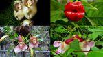 Drôles de plantes (Doc) [VF]