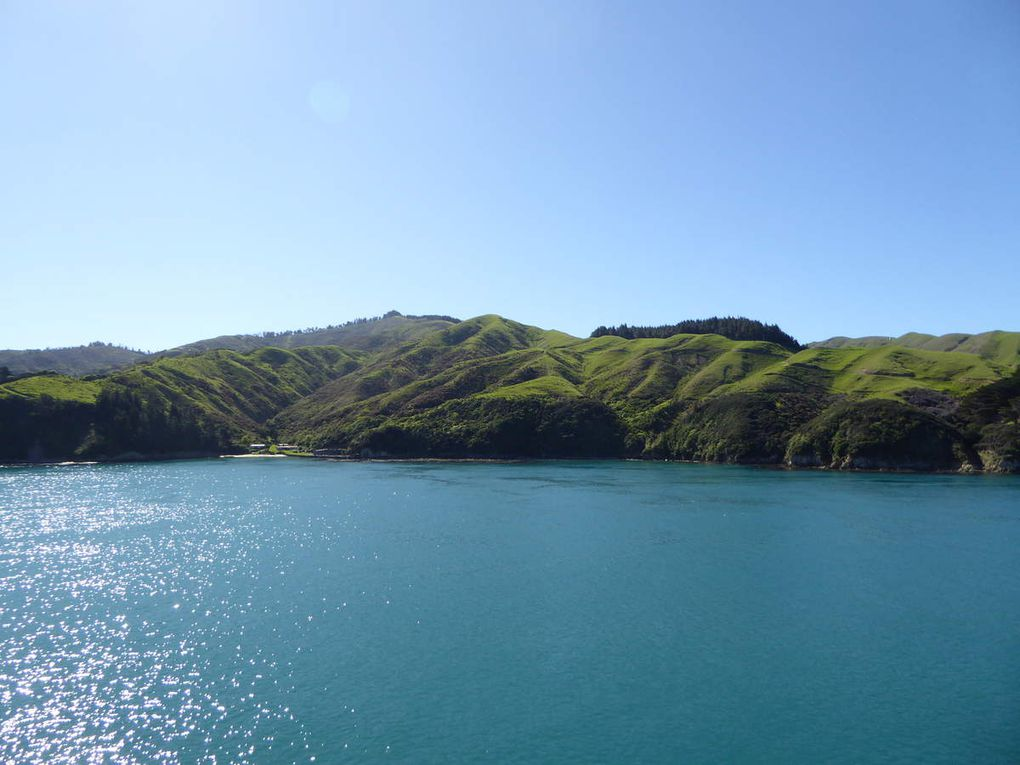 Traversée Ile Nord - Ile Sud Nouvelle Zélande
