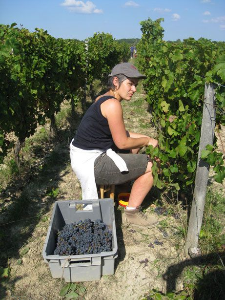 Album - Vendanges-2009