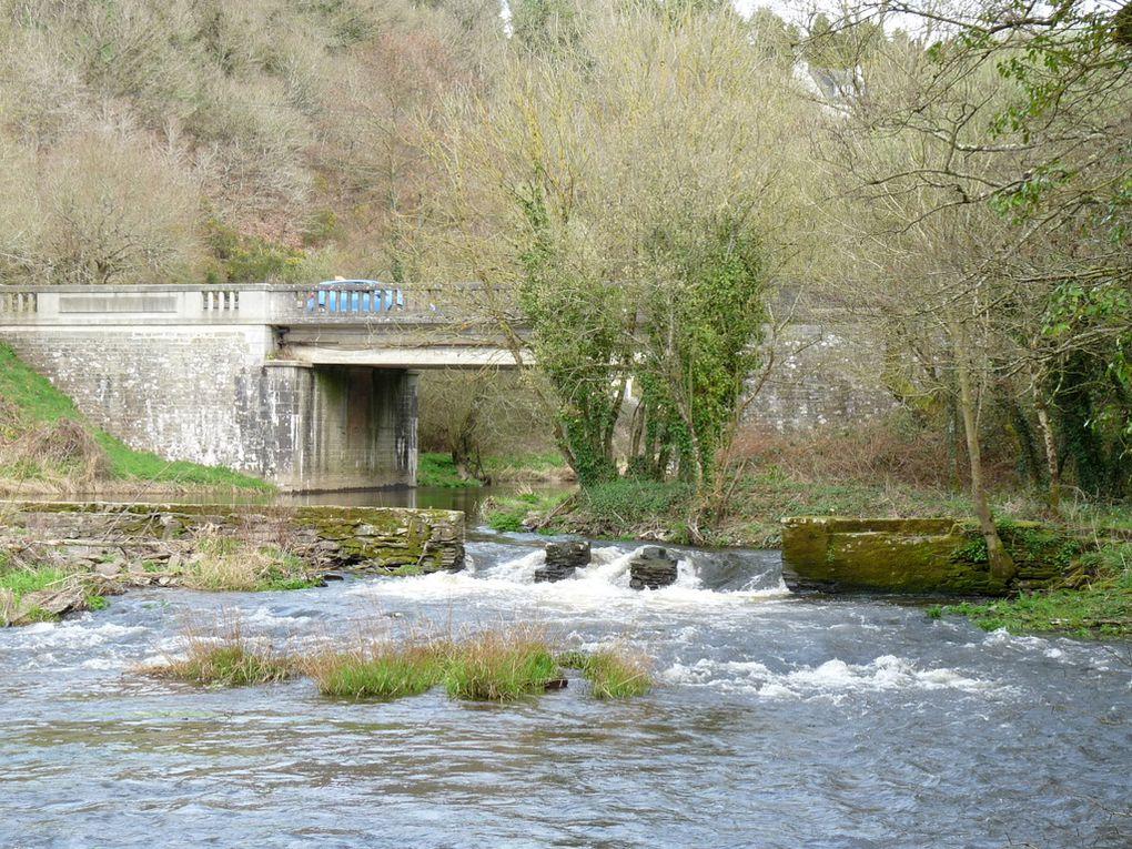 """Sur les bord de la rivière  """"L'HYERE """" à Carhaix - Plouguer (Finistère )  le 24 mars 2017"""