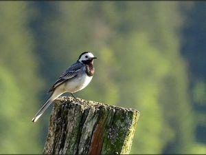Quelques oiseaux de taille variée... - 10 photos