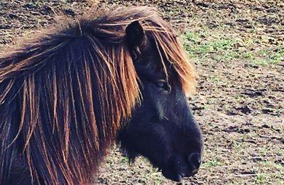 Pferdemädels