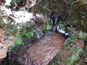 la beauté du froid qui fige les feuilles dans cette petite source.