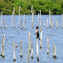 Un cormoran solitaire au Teich...