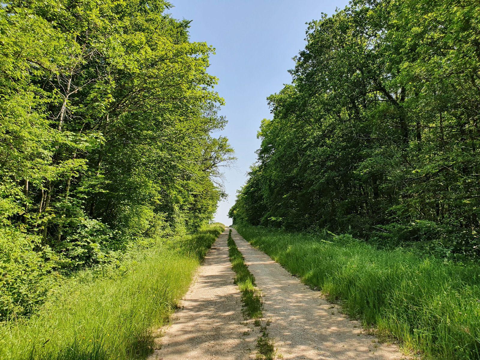 Forêt domaniale de Proverville