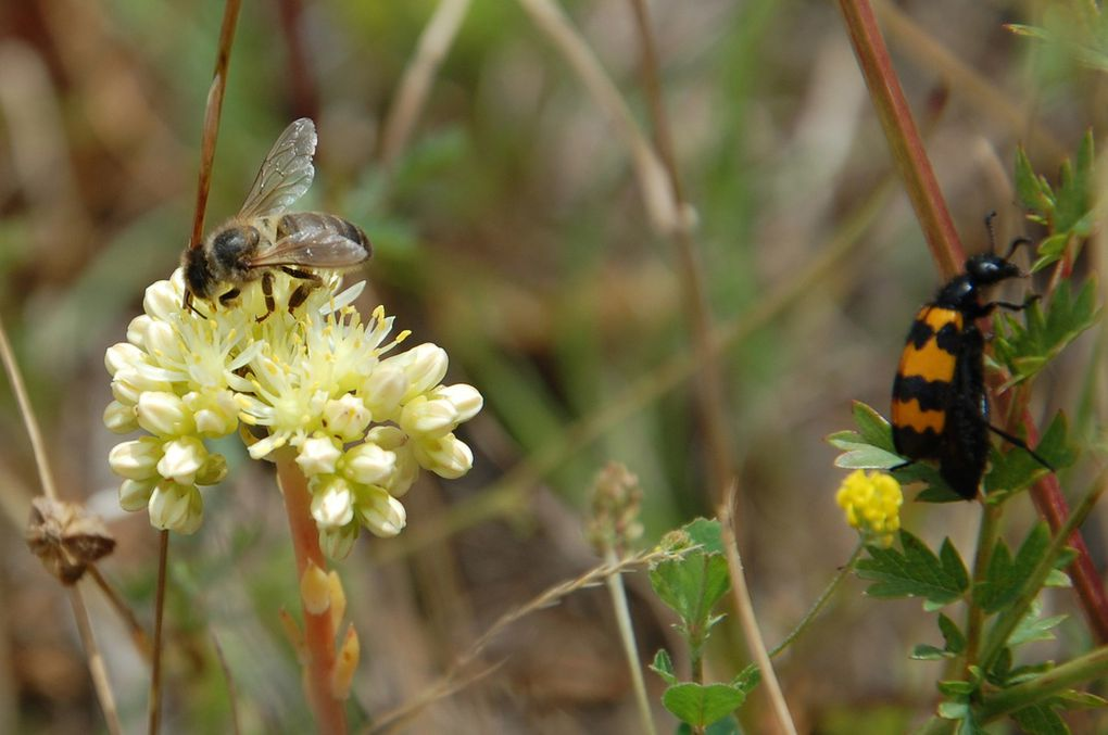 Une abeille mais pas que avec le vent deux invités.