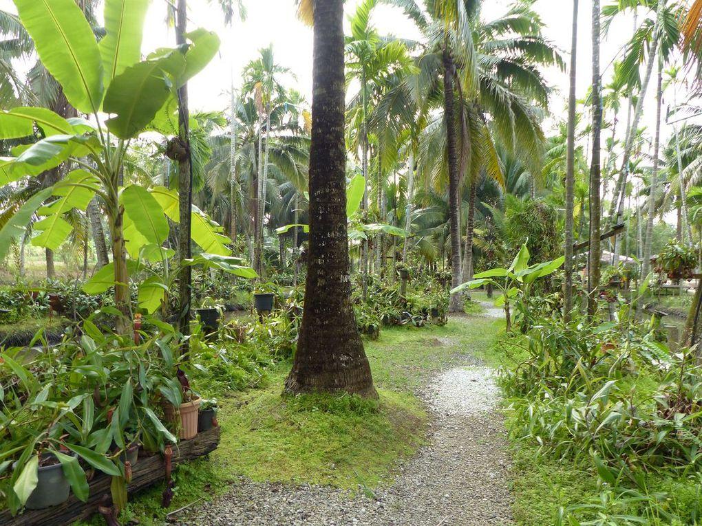 Rayong Smile Plants