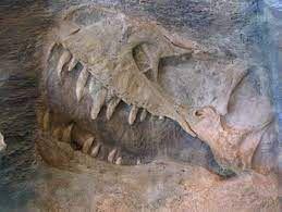 La Tunisie renferme en son sol des restes de dinosaures et monstres marins