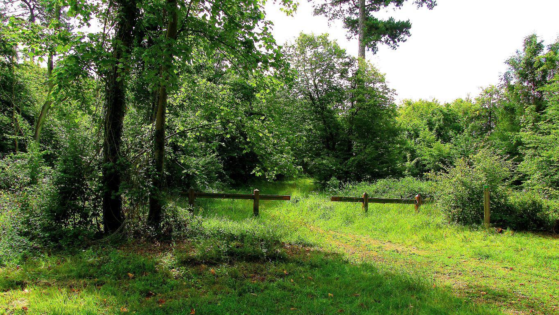 carrefour_Route Forestière des Beaux Monts_Sentiers (parcelle 1211)